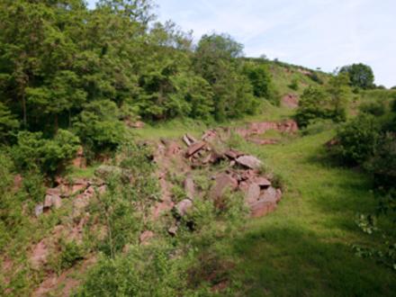 Renaturierter Steinbruch: vielfältiger Lebensraum